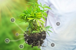 Woman holds in hand seedling grown plant with help of fertilization and nutrients necessary for plant growth. Cultivate plants with digital mineral nutrients icon. Concept of farming on loamy soils