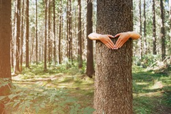 Woman hugging a tree and female hands making heart shape gesture on a trunk in summer forest. Concept of care for environment.