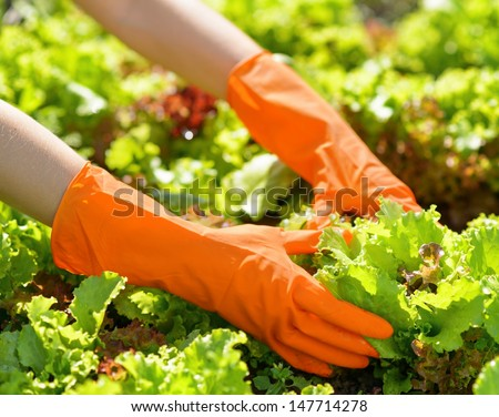 Woman in orange gloves working in the garden.
