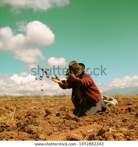 Woman in the Andes - Potatoe harvest in Peru