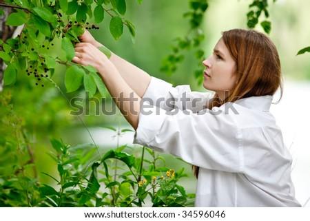 Woman in white picking chokecherries