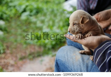 woman is holding  puppies in her hands, taking care of small defenseless animals #1099369268