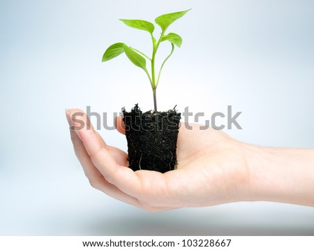 Woman is holding young plant that grows in a lump of soil.