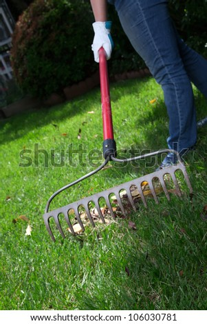 Woman is raking leaves on lawn in her back yard