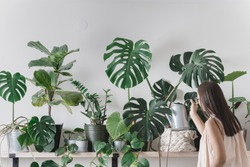 woman is taking care of houseplants. urban jungle interior. watering and spraing with water.