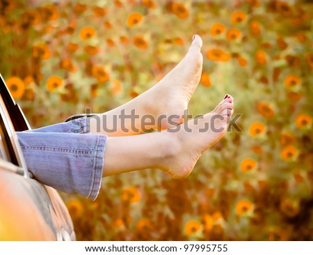 Woman legs out the windows in car above the sunflowers field