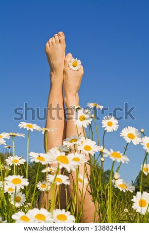 Woman legs sprouting from a bunch of daisies in the spring or summer field - against blue sky