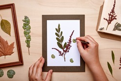 Woman making decoration with pressed flowers and leaves. Framing dried plants. Top view.