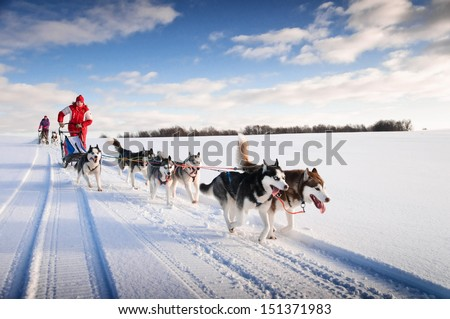 Woman musher hiding behind sleigh at sled dog race on snow in winter Stock photo ©