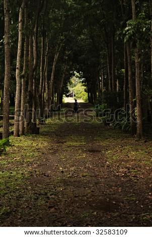 Woman on a Dark Tree Trail