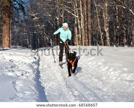 Woman on ski is going for a running dog. - stock photo