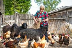 Woman petting herd of sheep