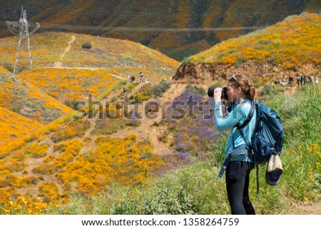 Woman photographer takes photos at Walker Canyon in Lake Elsinore California during the poppy super bloom 2019