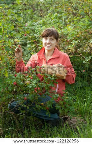 Woman picking briar in plant