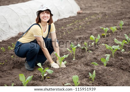 woman planting cabbage seedling in ground
