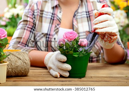 woman planting flowers in pots, close-up hands. #385012765