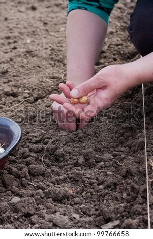 Woman planting onion