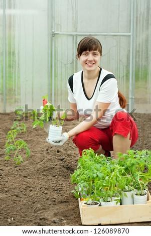 woman planting tomato spouts in greenhouse - stock photo
