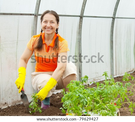 woman planting tomato spouts in greenhouse