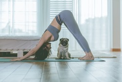 woman practice yoga Downward Facing dog or yoga Adho Mukha Svanasana pose to meditation with her dog pug breed enjoy and relax with yoga at home,Recreation with Dog Concept