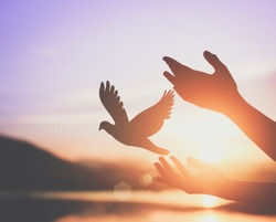 Woman praying and free bird enjoying nature on sunset background, hope concept / soft focus picture /   cinematic tone