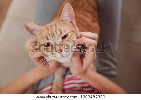 woman relaxing with her ginger tabby cat on a sofa. Cosy scene, hygge concept. Animals and lifestyle