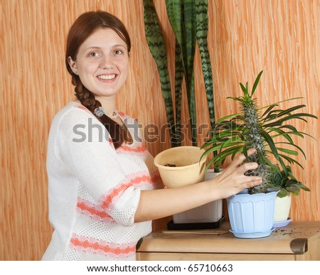 woman repotting Pachypodium cactus to new pot at her home