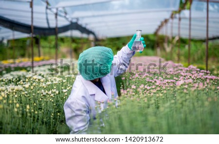 Woman researcher in white dress researching and development of new chrysanthemum species. Research flower concept
