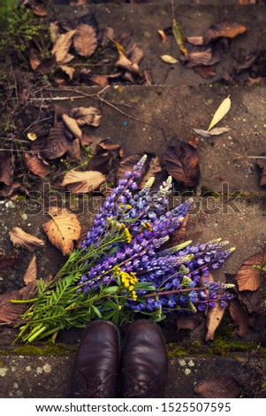 woman's feets and beautiful bouquet of lupines lie on the old concrete stairway/view from above
