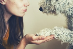 woman's hand and dog's paw