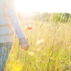 Woman's hand holding a poppy lit evening sun