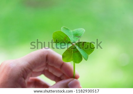 Woman's hand holding four leaf clover #1182930517