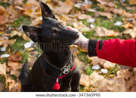 Woman\'s hand stroking black dog. The dog is wearing a red collar.
