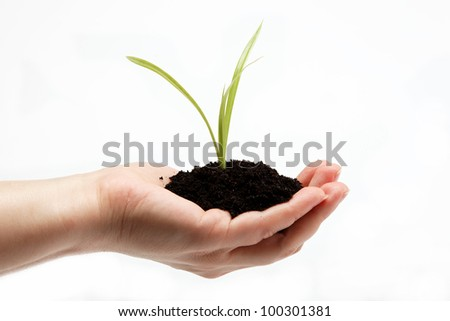 Woman's hand with a green sprout in the ground on a white background.
