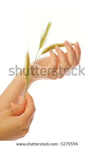 Woman's hand with wheat isolated on white background