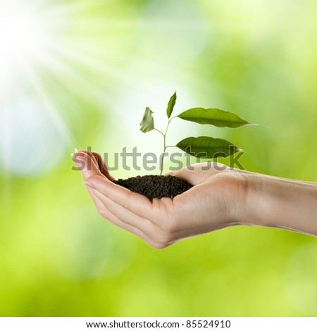 Woman's hand with young plant in soil over nature background