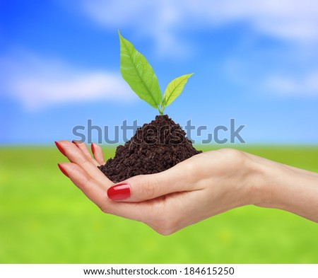 woman\'s hands are holding green plant over bright nature background