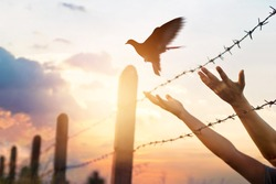 Woman's hands free the bird above a wire fence barbed