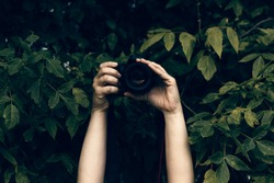 Woman's hands holding camera and snapping photos hidden in the bushes