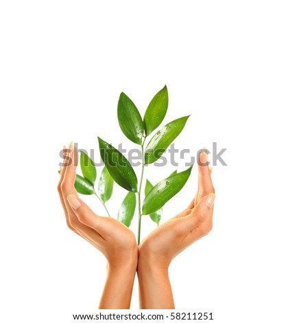 woman's hands holding green leaf #58211251
