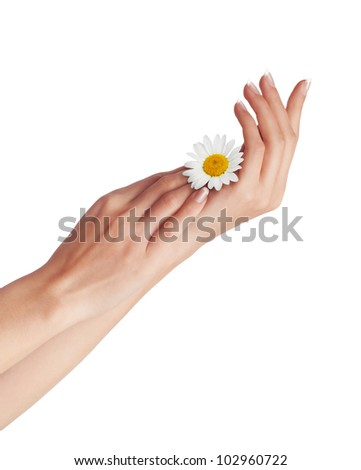 Woman's hands with a chamomile isolated on a white background