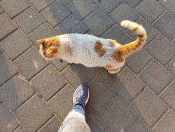 Woman's leg and a one cute street cat in Tel Aviv, Israel, shot from above. The single cat wouldn't let the woman pass. Cat is bicolor: white and orange. Ginger. Sidewalk tiles are gray.