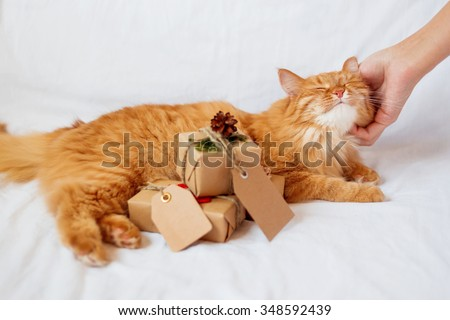 Woman scratching neck of ginger cat lies on bed with stack of christmas presents. Gifts are wrapped in craft paper and have empty tags for your text.