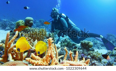 Woman scuba diver admiring beautiful coral reef and a couple of beautiful yellow coral fish #1022309644