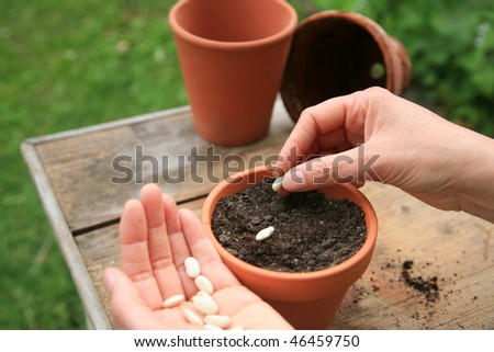 Woman seeding beans - stock photo