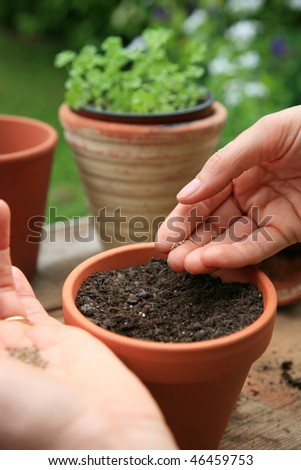 Woman seeding herbs