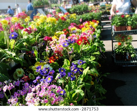 Woman shopping for flowers at the garden center