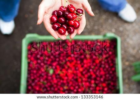 Woman showing cherry over bin