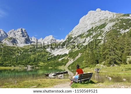 Woman sitting on a bench and observing a calf at the beautiful alpine lake Seebensee near Ehrwald, Tyrol, Austria. Rocky mountains under blue sky in the background #1150569521