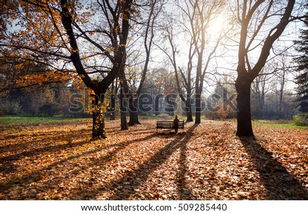 Woman sitting on the bench at the oak grove with yellow trees